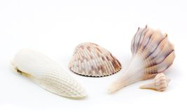 Four Seashells. On white background royalty free stock photos