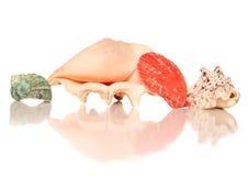 Four seashells  Stock Photos