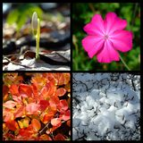 Four season. Wild life details photographed in four season time Royalty Free Stock Photography