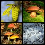 Four season Stock Photography