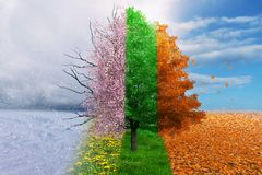 Four season change concept tree. On a summer and winter sky background stock photo