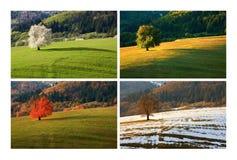 Four season cherry tree. Four season single spring cherry tree on meadow. One year in life of tree. Spring, summer, autumn, winter landscape Royalty Free Stock Photo