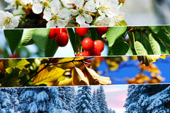 Four season collage - horizontal banners Royalty Free Stock Image
