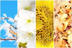 Four season collage Stock Images