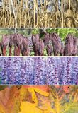 Four season collage. A collage of scenes of the four seasons: spring, summer, fall, winter Royalty Free Stock Images
