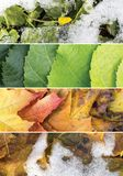 Four season collage. A collage of scenes of the four seasons: spring, summer, fall, winter Stock Images