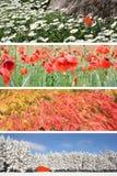 Four season collage Stock Photo