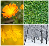 Four season conceptual collage Royalty Free Stock Photo