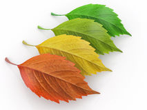 Four season.  Green, red and yeloow leaf Royalty Free Stock Images