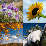 Four season nature collage Royalty Free Stock Photography