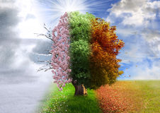 Four season tree, photo manipulation Royalty Free Stock Images