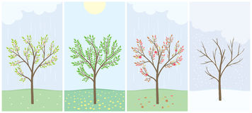 Four season. With tree - spring, summer, autumn and winter Stock Photo