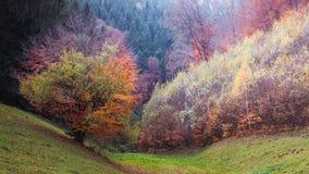 Four season tree. Royalty Free Stock Images