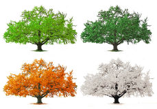Four season tree Royalty Free Stock Images