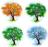 Four season trees. Deciduous tree in four seasons, vector illustration Stock Photo