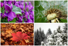 The four seasons. A composition of four shots representing the four seasons Stock Photo