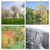 Four Seasons. Various trees during each season - spring, summer, autumn and winter Stock Photography