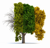 Four seasons. Conceptual tree in four seasons - 3d render illustration Stock Images