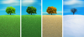 Four seasons. A tree in four seasons - 3d render stock illustration
