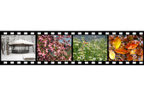 Four seasons. Film representing four seasons, isolated over white Royalty Free Stock Image