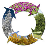 Four Seasons. Circle of Detail Four Seasons on white background Royalty Free Stock Images