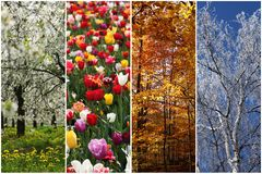 Four seasons. Collage of nature pictures representing the four seasons