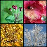 Four seasons Stock Photography