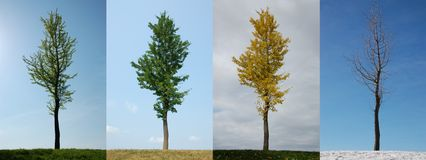 Four seasons. Same lone tree over the span of a year.  Spring, Summer, Autumn, Winter.  Canada Stock Images