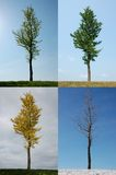 Four seasons. Same lone tree over the four seasons: Spring, Summer, Autumn, Winter Royalty Free Stock Image