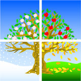 Four Seasons. Illustration of a tree divided into the four seasons