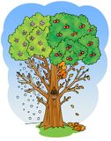 Four seasons cherry tree illustration Royalty Free Stock Photos