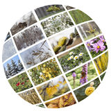 Four seasons collage. Royalty Free Stock Photos
