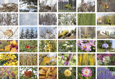 Four Seasons collage. Fall, winter, spring and summer. Stock Photography