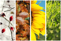 Four seasons collage. Including winter, autumn, spring and summer stock photo