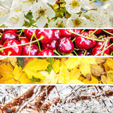 Four seasons collage. Collage made of thin strips of typical four season nature, horizontal Royalty Free Stock Image