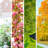 Four seasons collage. Set of beautiful landscapes at  winter, spring, summer and autumn Stock Images