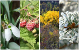 Four seasons. Collage: Spring, summer, autumn and winter royalty free stock photos