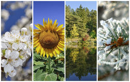 Four seasons. Collage: Spring, summer, autumn and winter royalty free stock image
