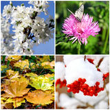 Four seasons collage - spring, summer, autumn, winter Stock Photo