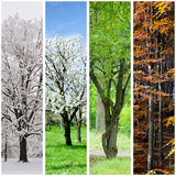 Four seasons collage Stock Photo