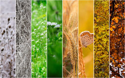 Four seasons collage. Winter, Spring, Summer, Autumn Stock Photo
