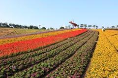 The four seasons flower field stock photo