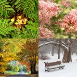 Four seasons in four pictures royalty free stock image