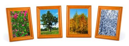 Four seasons (my photos) Royalty Free Stock Photos
