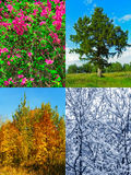 Four seasons (my photos) Stock Photography