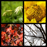 Four seasons in nature. Collage of four  pictures representing each season: spring, summer, autumn and winter, nature - for seasons background Stock Photos