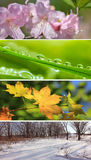 Four seasons of nature. royalty free stock photos