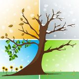 Four seasons in one tree. Spring, summer, autumn, winter vector illustration Royalty Free Stock Images