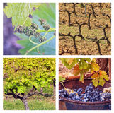 Four Seasons In Provence. Collage with 4 photos of vineyards ib different seasons Royalty Free Stock Images