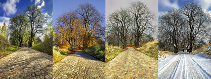 Four Seasons of a Row of Lime Trees, nature Stock Images
